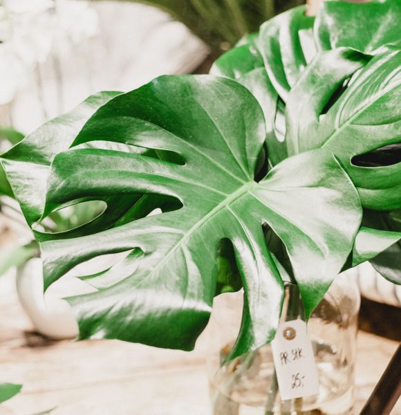 Houseplants to help reduce stress and boost your mood